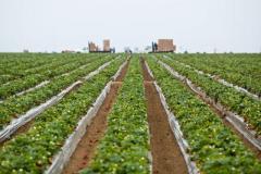 Les producteurs de grains prêts à céder la direction du CEROM