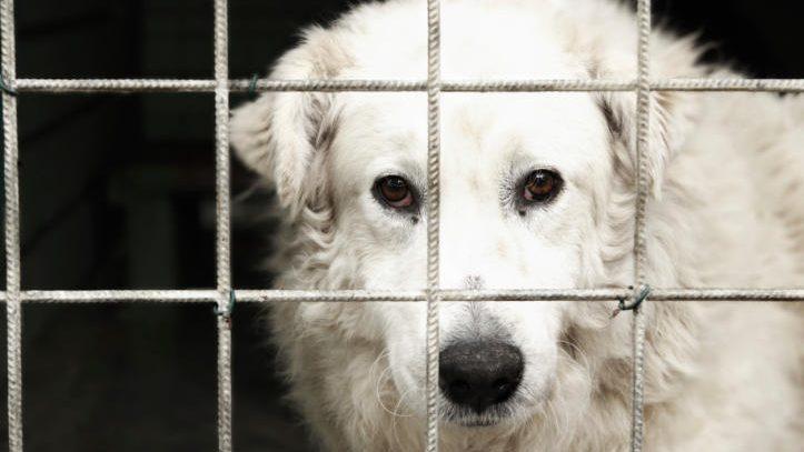 Un regroupement conteste le règlement animalier de Montréal devant les tribunaux