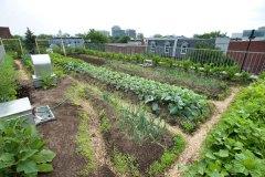 1,2M$ pour développer les zones agricoles dans le Grand Montréal