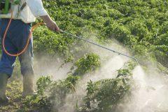 Les pesticides, les lobbys et le filet mignon