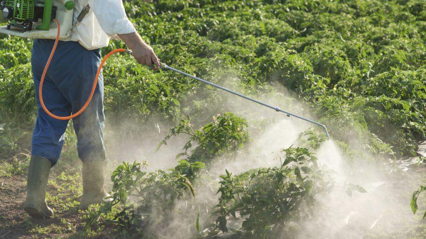 Les pesticides pourraient faciliter le développement du Parkinson et de l'autisme
