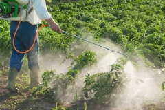 Pesticides: coup de balai au CÉROM, le Centre de recherche sur les grains