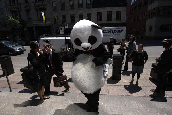 Julien Villeneuve: l'homme derrière le panda