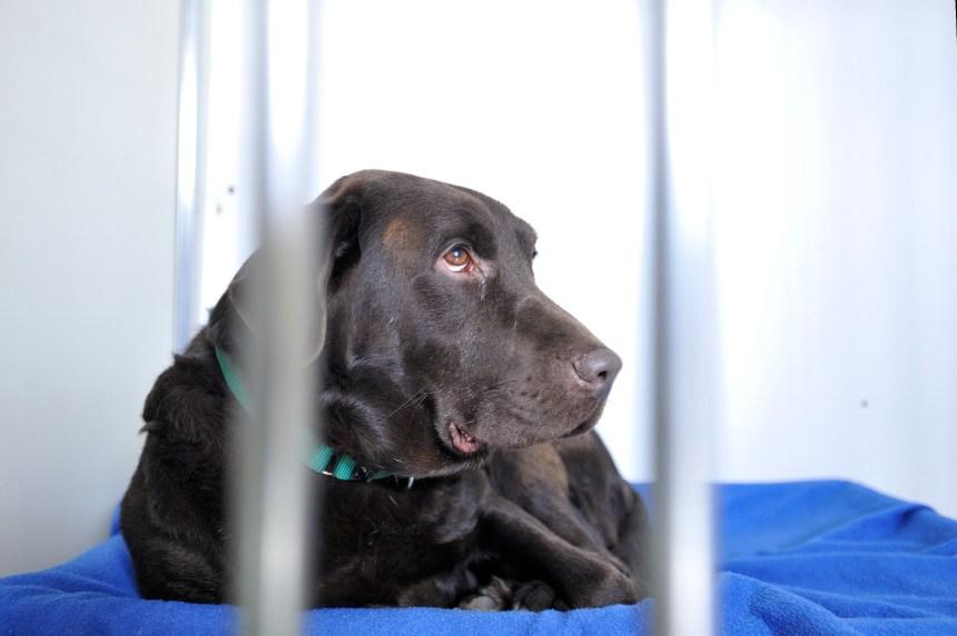 La SPCA de Montréal cesse de desservir Outremont