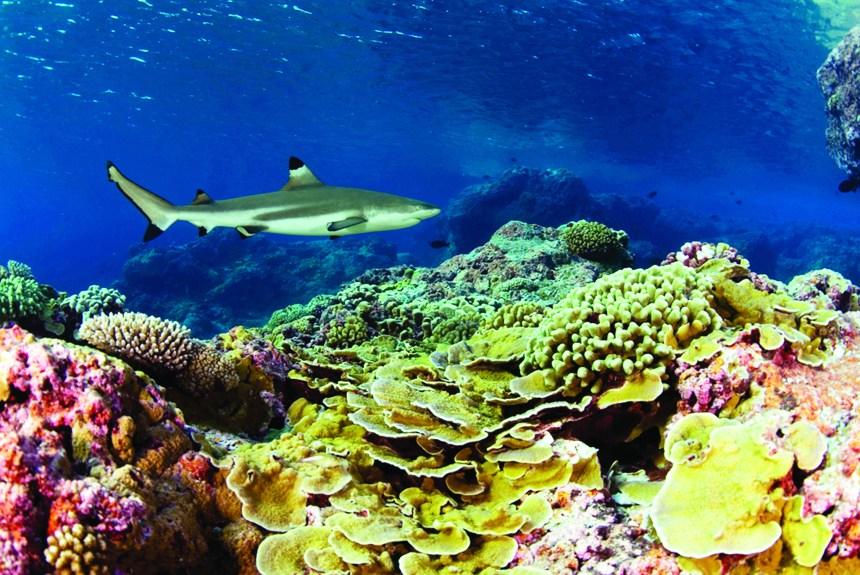 Récifs coralliens: une merveille dont les couleurs se fanent
