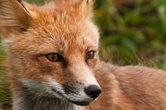 Ces animaux qui aiment, tolèrent ou évitent l'hiver
