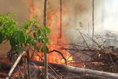 Luc Ferrandez demande 1 milliard de dollars pour l'Amazonie