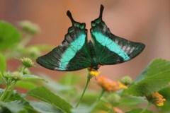 Les papillons en liberté mis à nu
