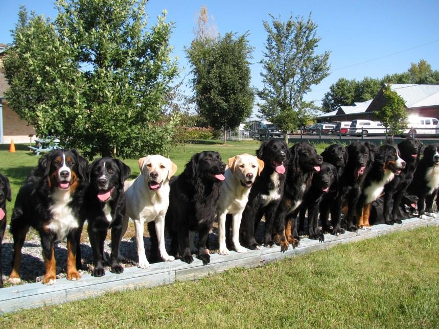Plus de chiens Mira pour aider les enfants autistes