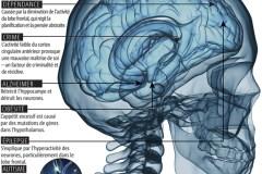 Le projet d'Obama: le cerveau de 1 G$