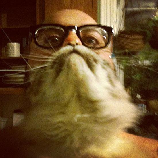 Le Cat bearding ou comment se faire une barbe avec son chat!