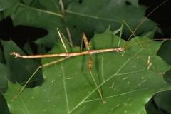 Quatre insectes québécois inusités