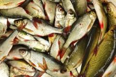 Oceana réclame un suivi des stocks de poissons