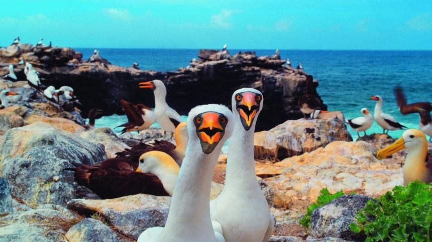 Cette semaine, on craque pour: St. Vincent, Cirque Oz, Galápagos 3D…