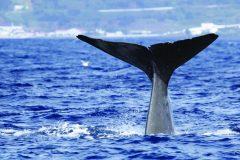 TripAdvisor: plus de billets pour les spectacles de dauphins et de baleines