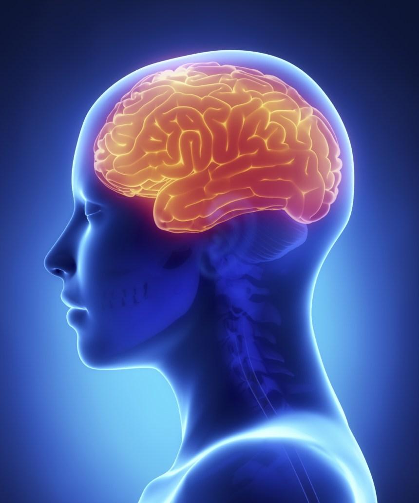 Alzheimer: des dommages au cerveau plus tôt que prévu
