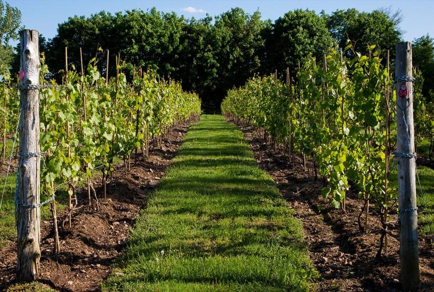 Devenir propriétaire d'une vigne… pour une année!