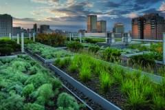 L'avenir des toits verts incertain