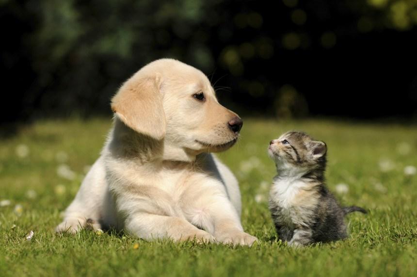 Traitement des animaux: Québec resserre les règles