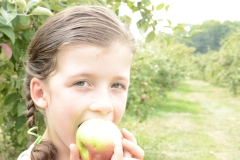 Aller aux pommes: à la découverte de vergers bio