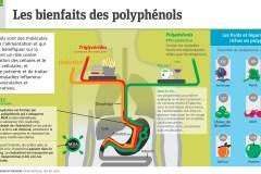 Infographie: Les bienfaits des polyphénols