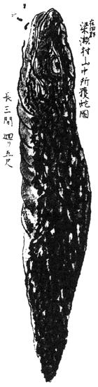 Cryptides - Tsuchinoko (Kuroda Suizan:wikimedia commons)
