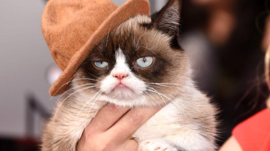«Grumpy Cat» est mort