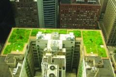 Les nombreux avantages des toits verts