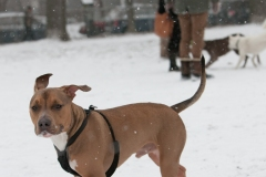Départ de la SPCA: Outremont critiqué