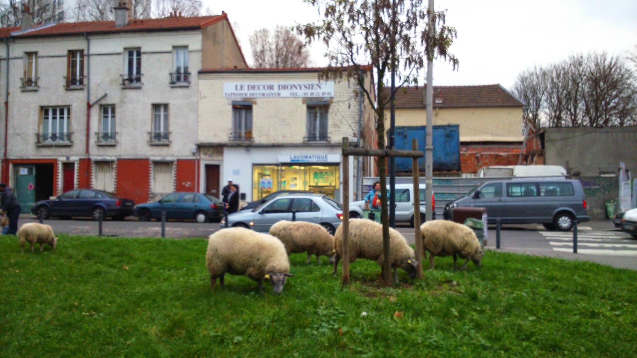 ACTU agri-moutons