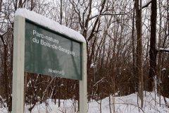 1,3M$ pour abattre 6300 frênes au parc du Bois-de-Saraguay