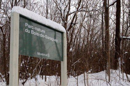 Bois-de-Saraguay: l'opposition soulève des questions sur le reboisement
