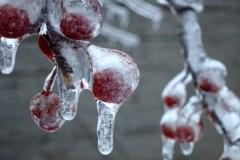 La pluie verglaçante et la neige paralysent le Québec lundi