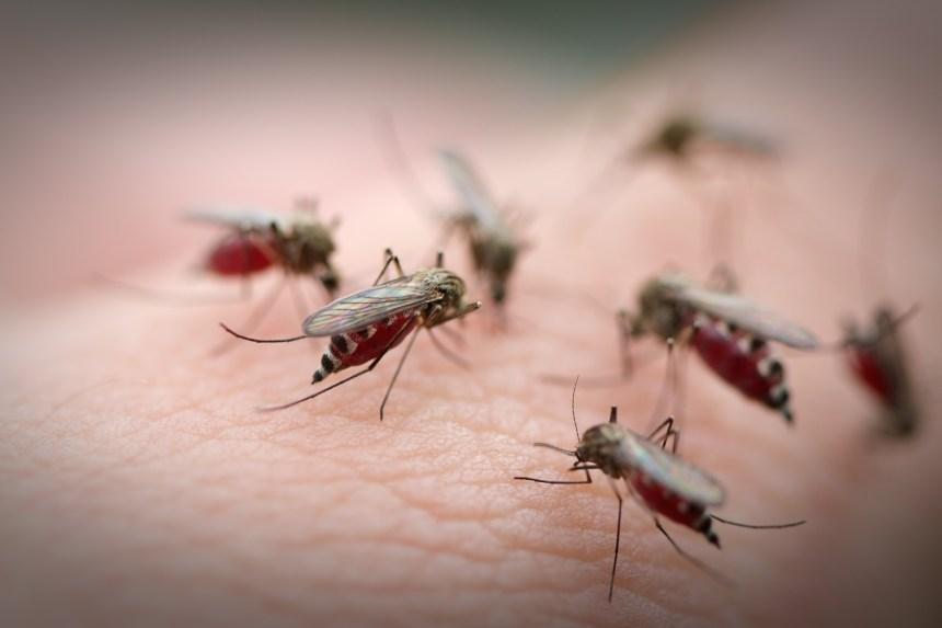 Chasser les moustiques de façon sécuritaire