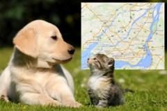 Ne pas enregistrer son chien ou son chat, un oubli qui pourrait coûter cher