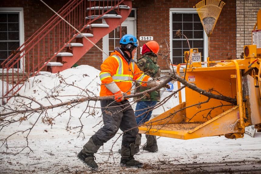 Plan de plantation de Montréal: MHM prioritaire