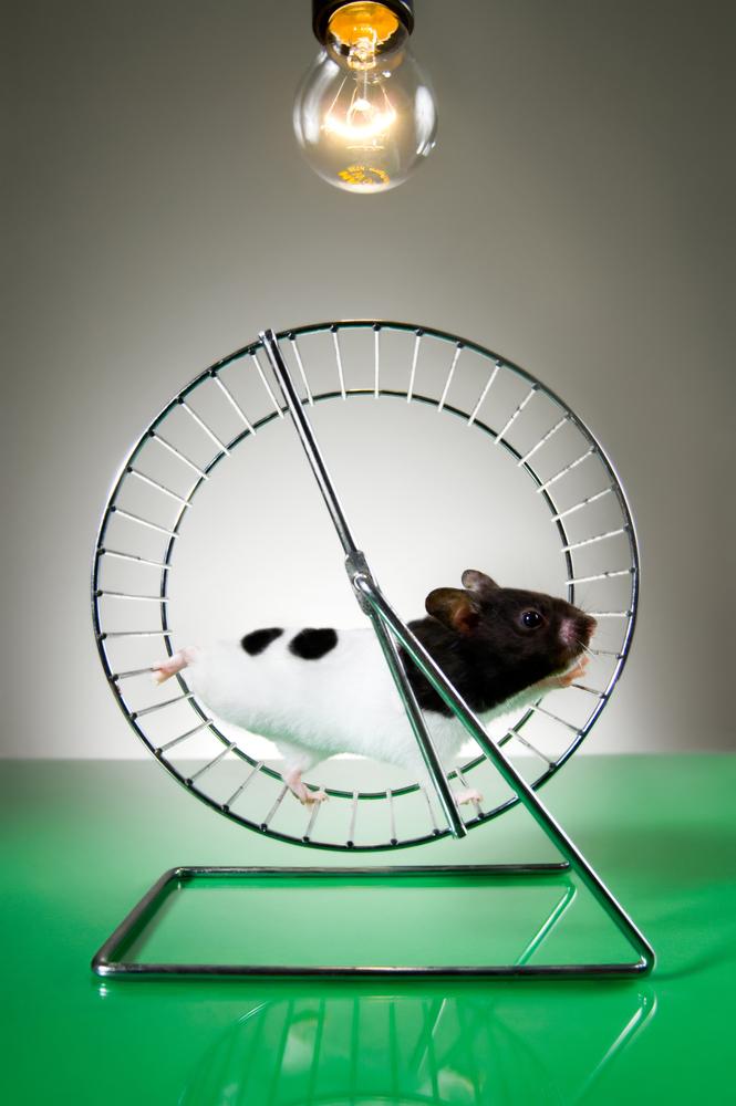 Des ultrasons éliminent des plaques de protéines liées à Alzheimer chez des souris