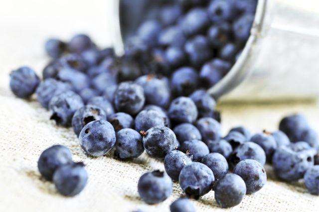 Les bleuets pourraient prévenir l'Alzheimer