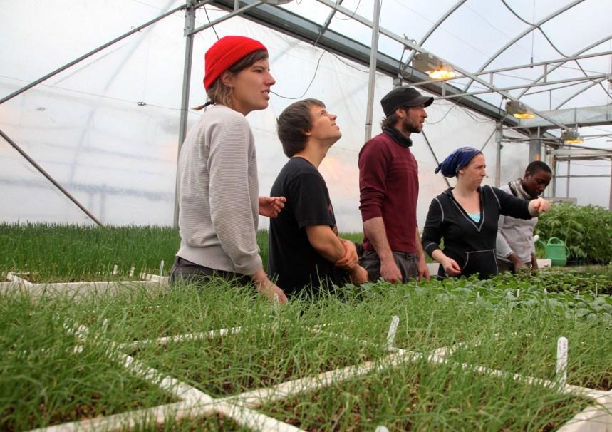 Des jeunes en insertion sociale cultiveront des légumes pour les plus démunis