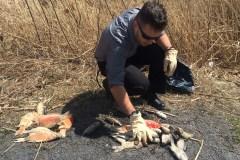Mort massive de poissons : un phénomène inquiétant
