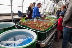Aquaponie urbaine: les poissons jardinent à Verdun