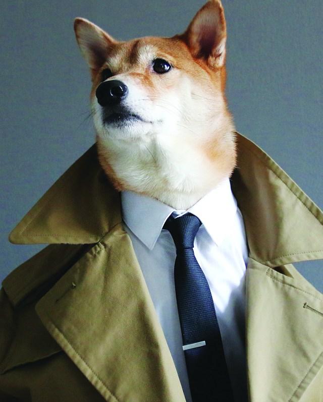 mensweardog_01trench