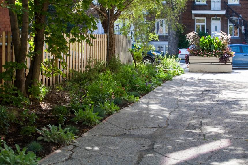 Villeray–Saint-Michel–Parc-Extension: 160 000$ pour des ruelles vertes