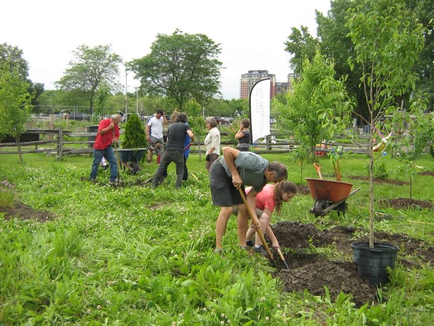 Inauguration d'un jardin collectif au Parc Angrignon