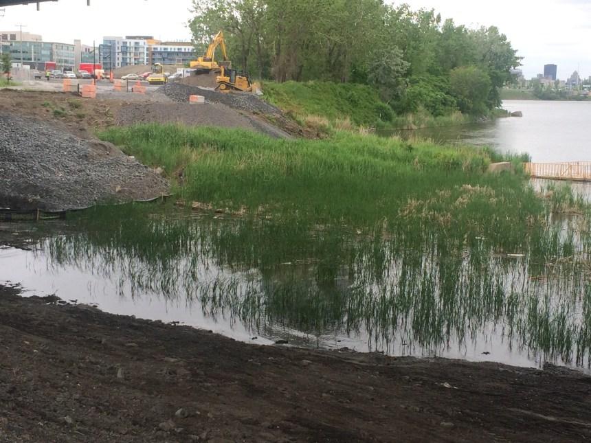 Nouveau pont Champlain: un impact sur la reproduction de l'esturgeon et de l'anguille