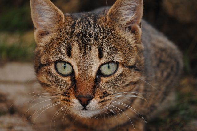La photo de chat que Facebook ne veut pas que vous partagiez