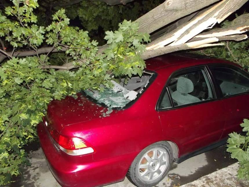 Un arbre s'effondre sur une voiture