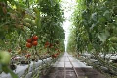 Un premier portrait de l'agriculture urbaine montre un phénomène en croissance