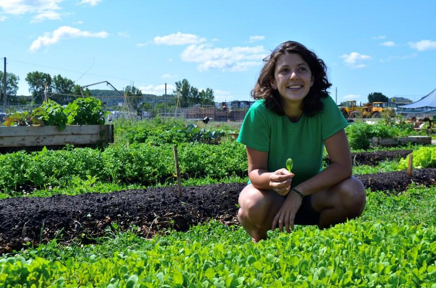 Futur campus de l'UdeM: faire pousser de la salade au milieu d'un chantier