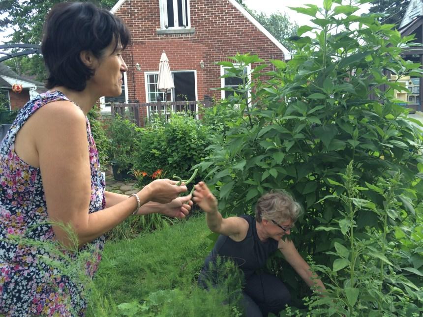 Offrir son terrain en échange d'un jardin